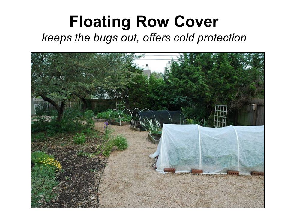Floating Row Cover keeps the bugs out, offers cold protection