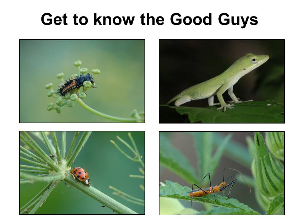 Get to know the Good Guys