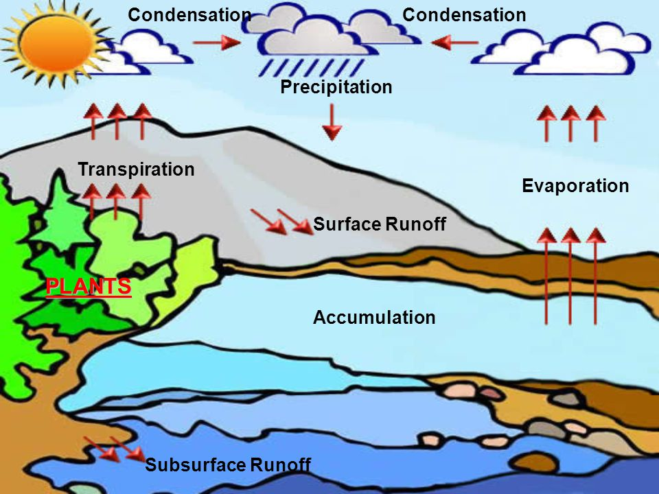 Evaporation Surface Runoff PLANTS Accumulation Subsurface Condensation Precipitation Transpiration