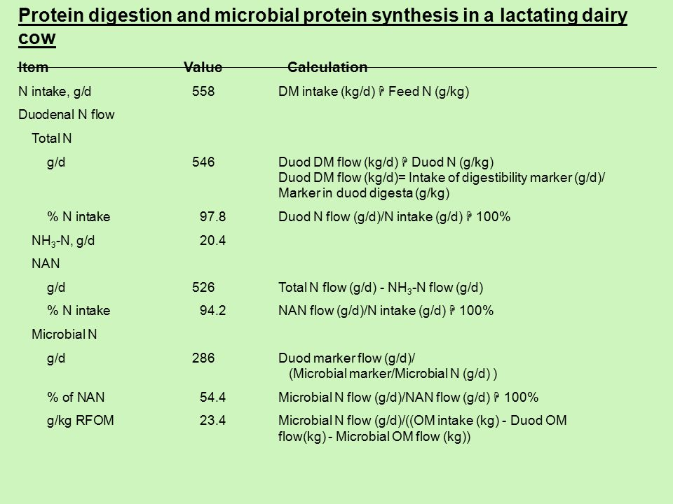 Protein digestion and microbial protein synthesis in a lactating dairy cow