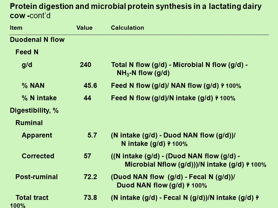 Protein digestion and microbial protein synthesis in a lactating dairy cow -cont'd
