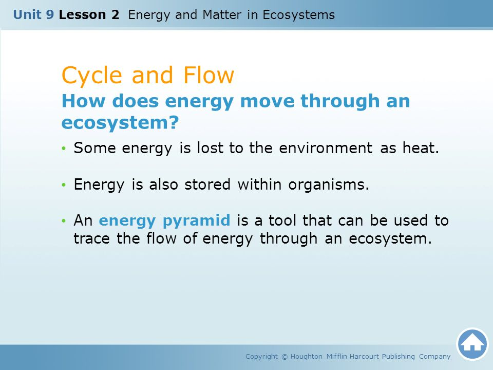Cycle and Flow How does energy move through an ecosystem