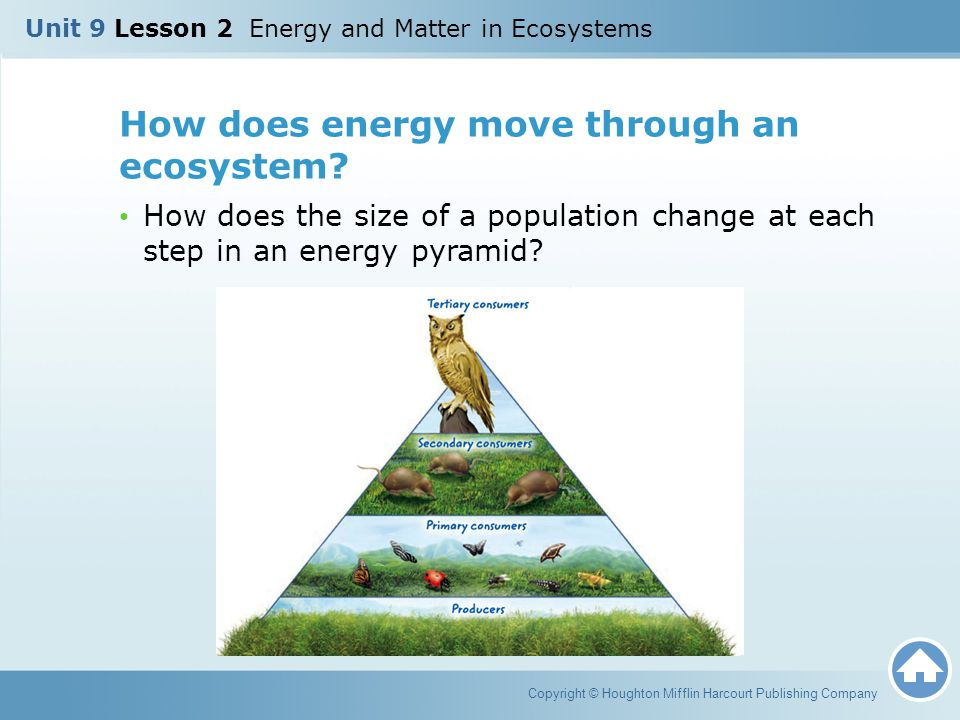 How does energy move through an ecosystem