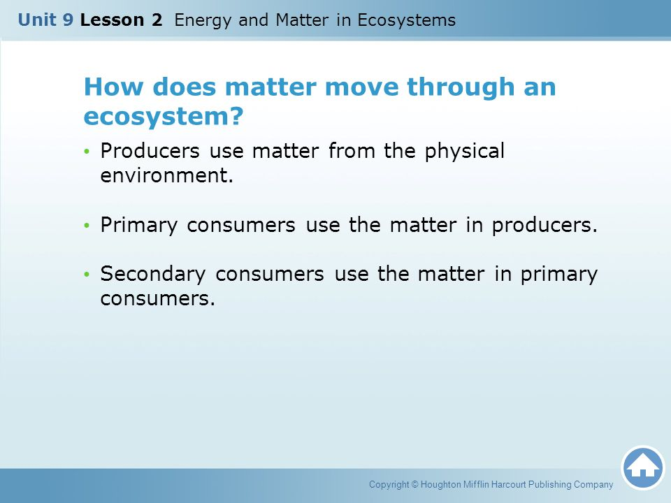 How does matter move through an ecosystem