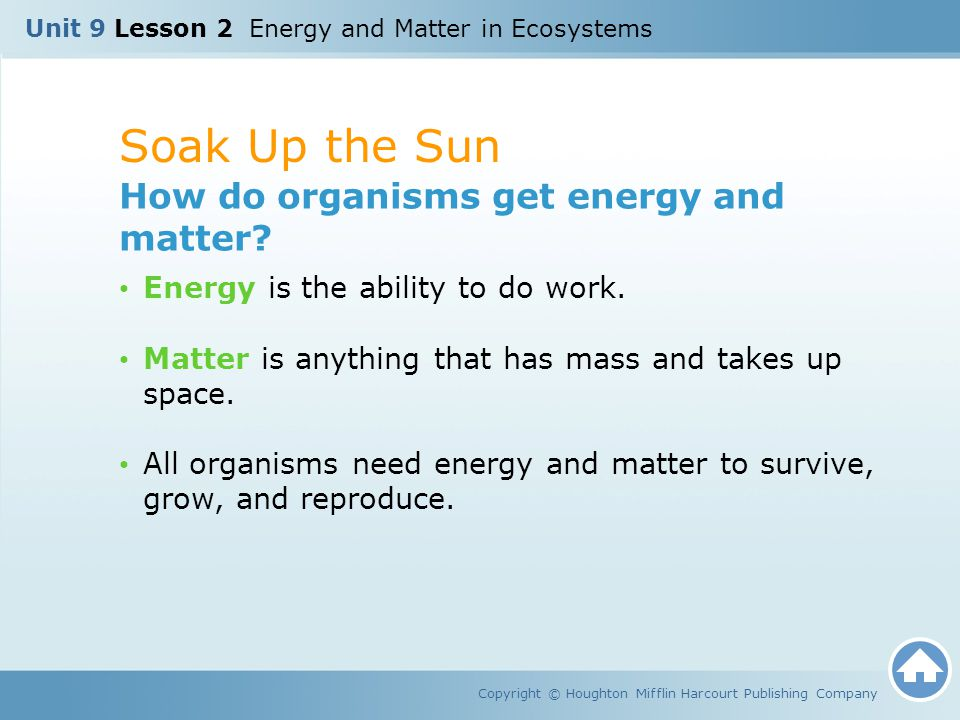 Soak Up the Sun How do organisms get energy and matter
