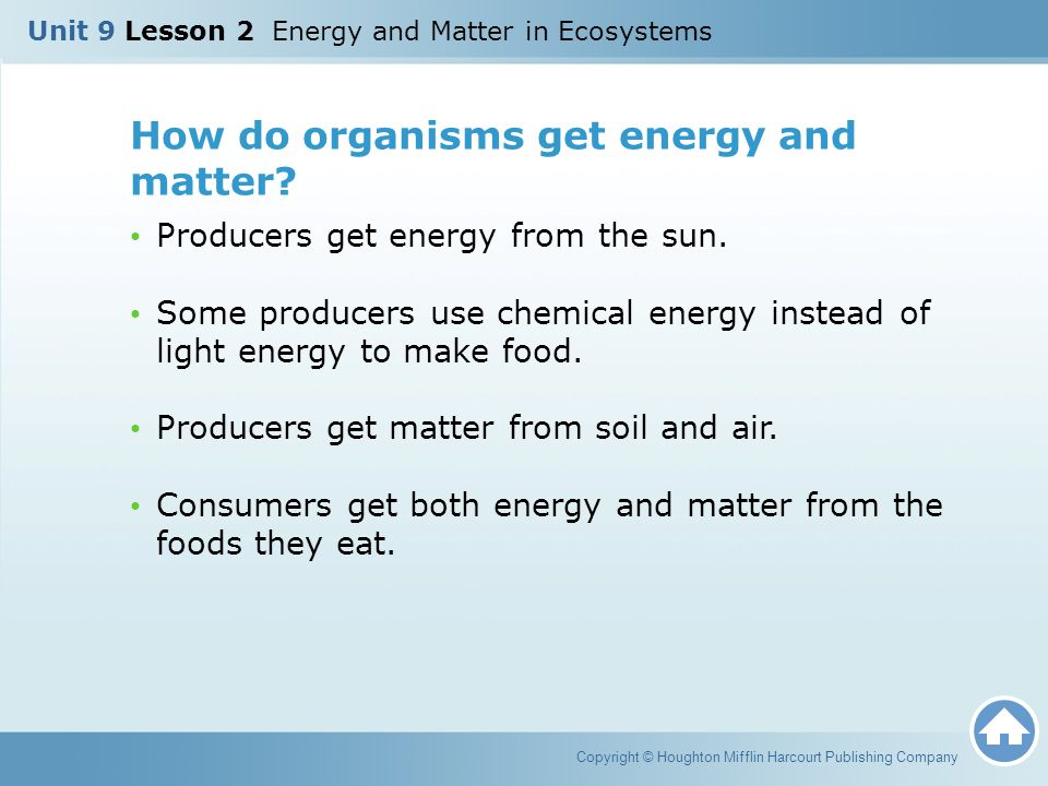 How do organisms get energy and matter