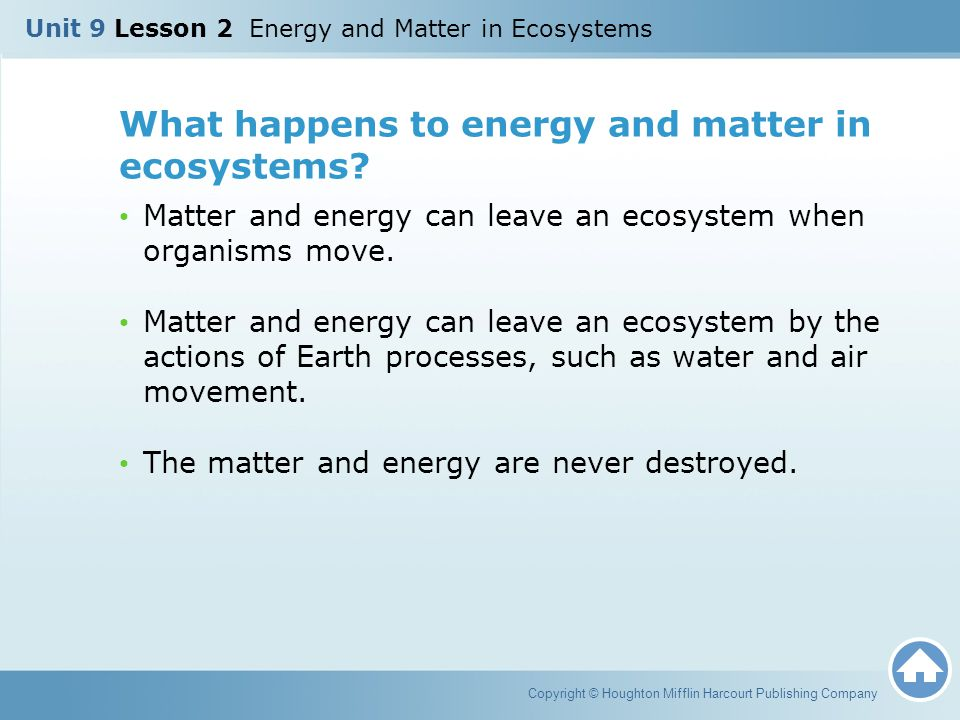 What happens to energy and matter in ecosystems