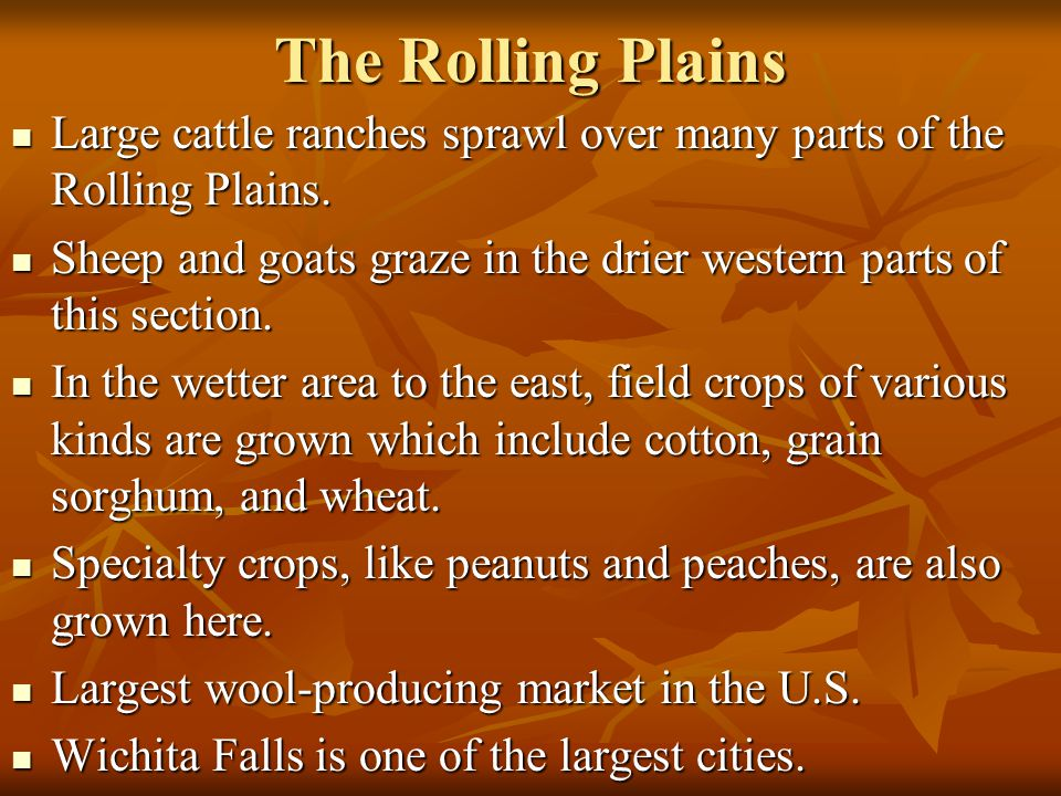 The Rolling Plains Large cattle ranches sprawl over many parts of the Rolling Plains.