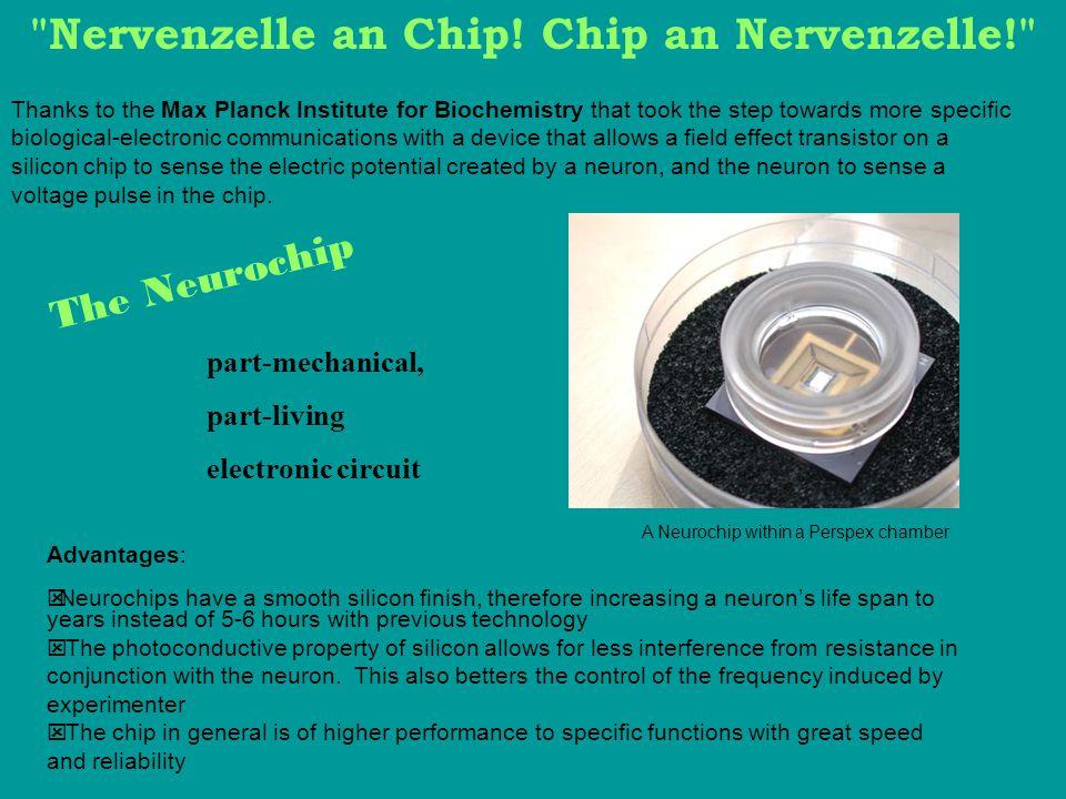 Nervenzelle an Chip! Chip an Nervenzelle!