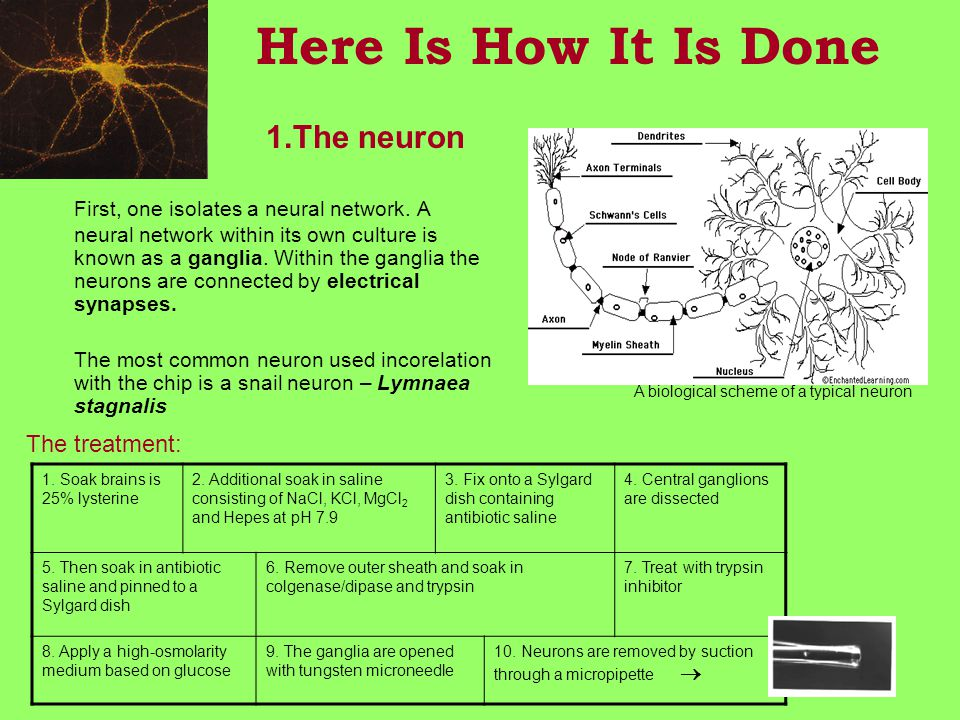 Here Is How It Is Done 1.The neuron