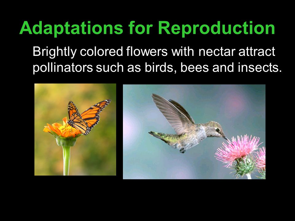 Adaptations for Reproduction