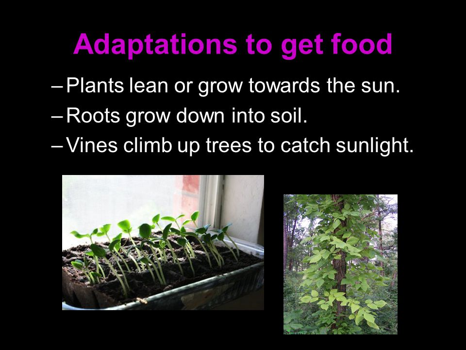 Adaptations to get food