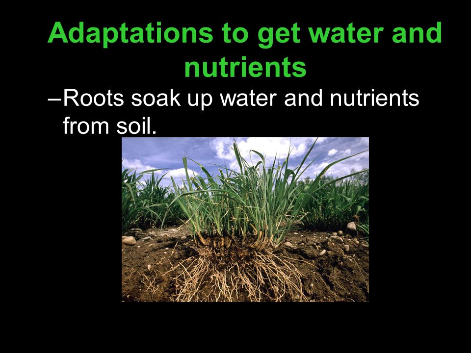 Adaptations to get water and nutrients