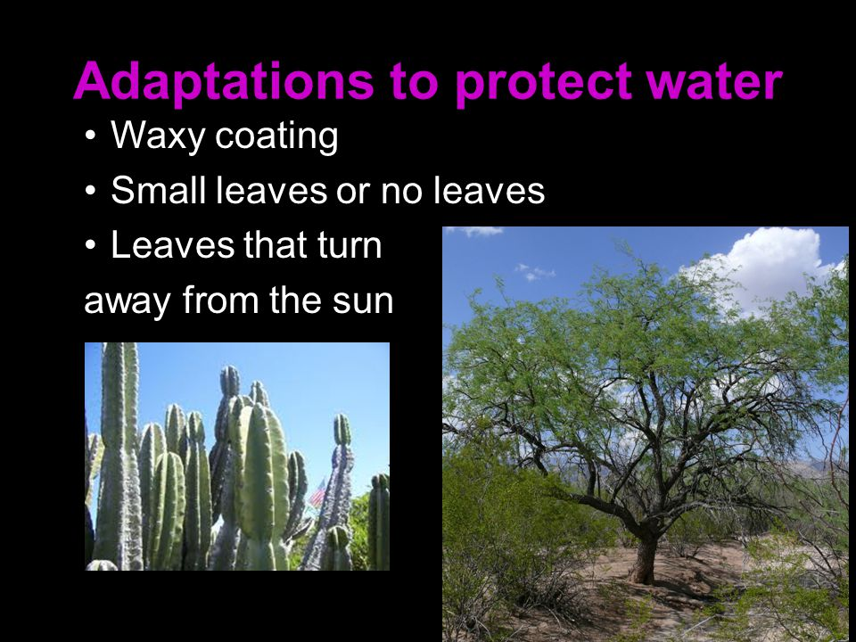 Adaptations to protect water