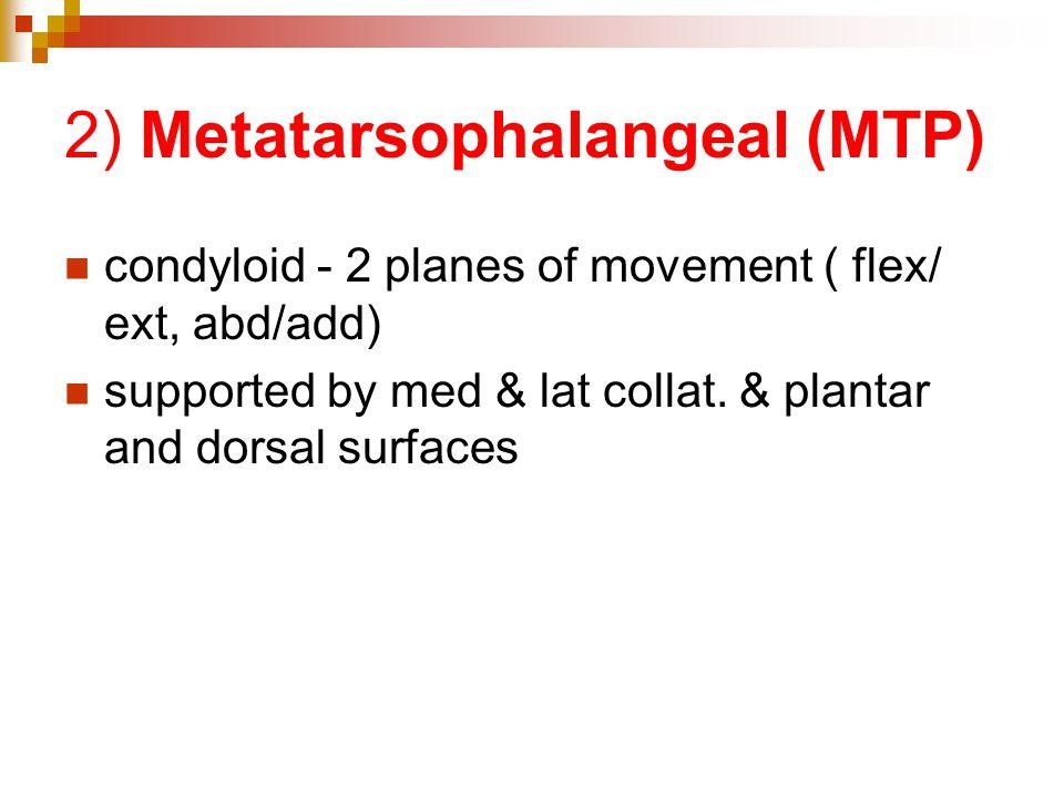 2) Metatarsophalangeal (MTP)