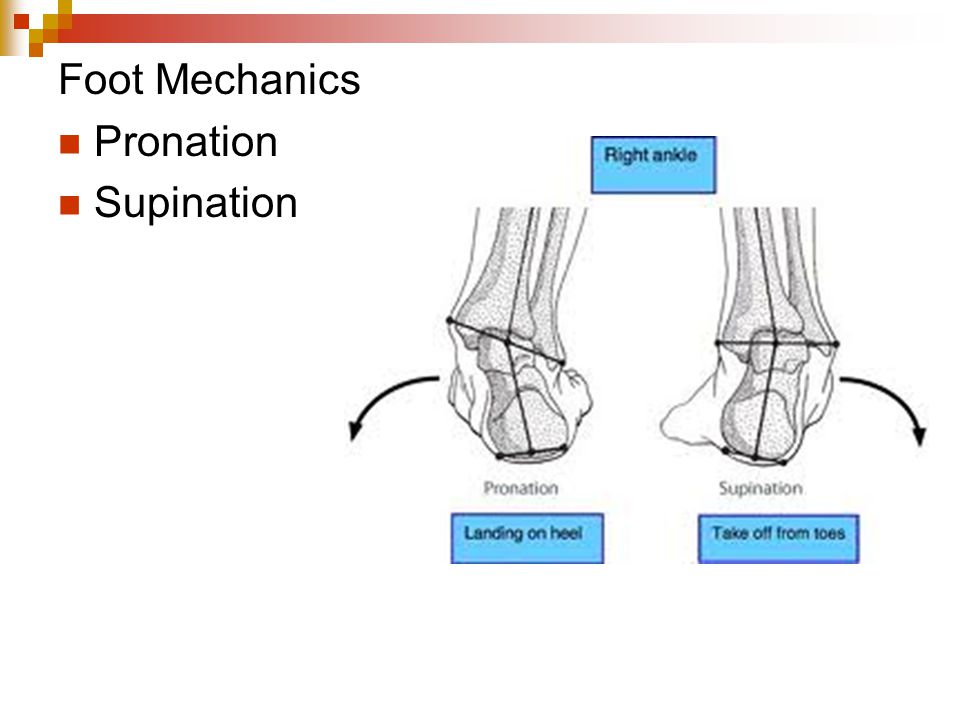 Foot Mechanics Pronation Supination