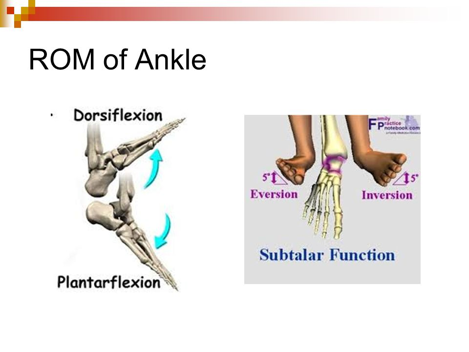 ROM of Ankle