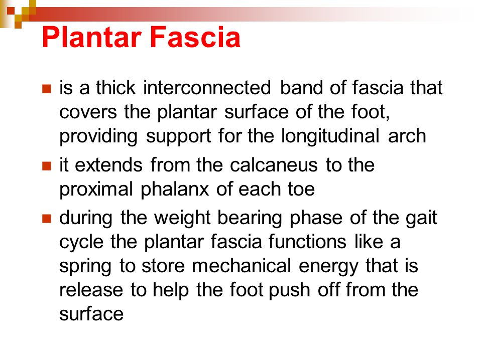 Plantar Fascia is a thick interconnected band of fascia that covers the plantar surface of the foot, providing support for the longitudinal arch.