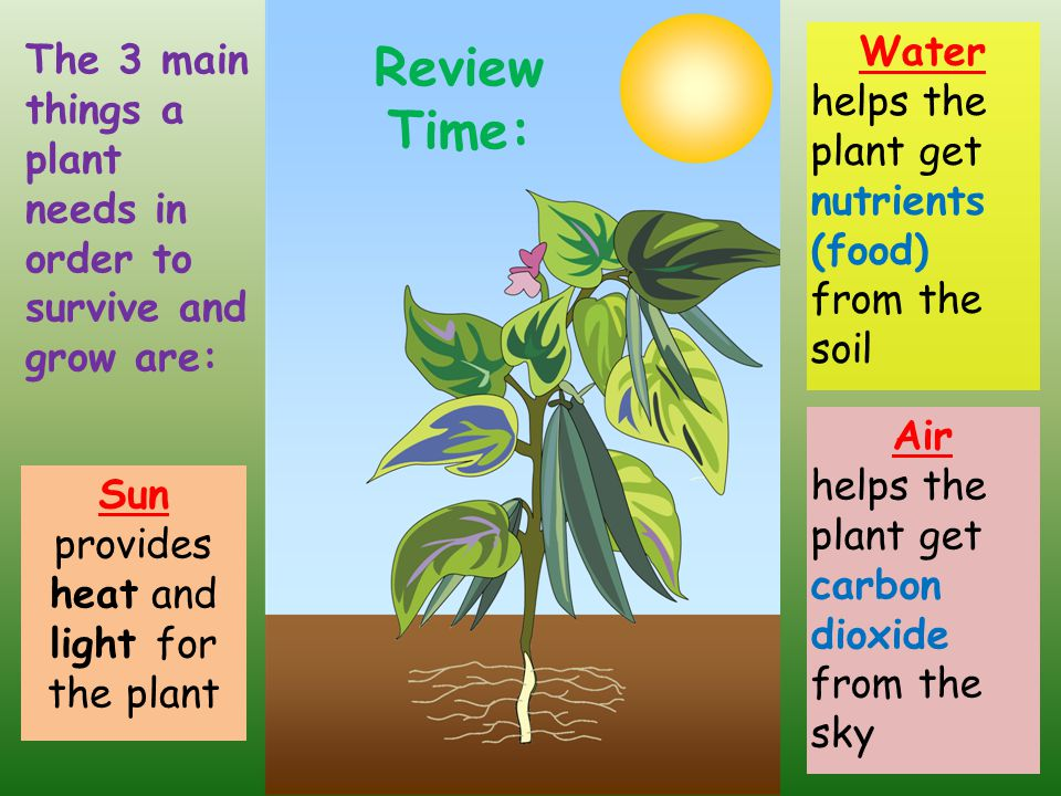 how to make a plant in soil a water plant