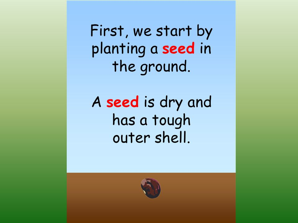 First, we start by planting a seed in