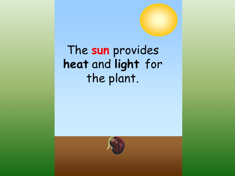The sun provides heat and light for the plant.