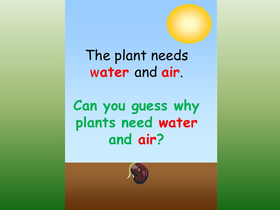 Can you guess why plants need water and air