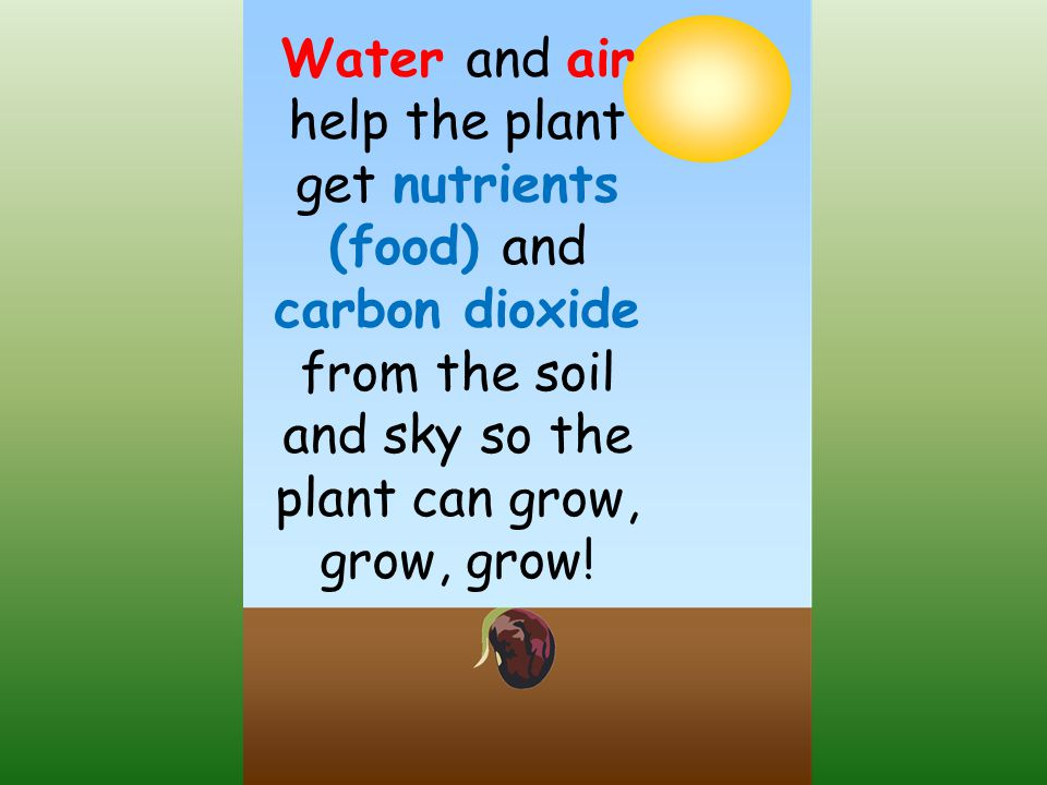 Water and air help the plant get nutrients (food) and carbon dioxide from the soil and sky so the plant can grow, grow, grow!