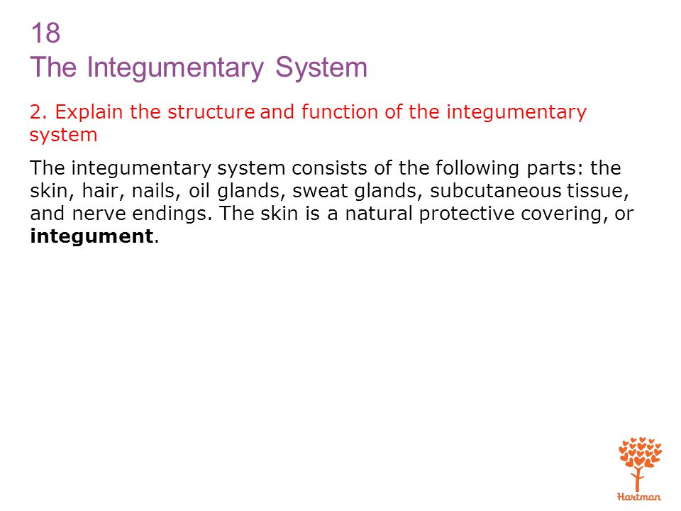 2. Explain the structure and function of the integumentary system