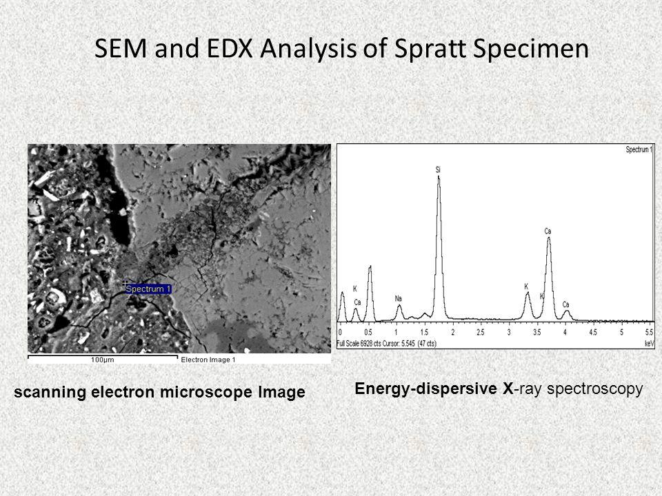 SEM and EDX Analysis of Spratt Specimen