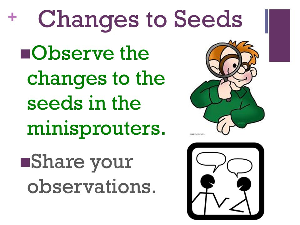 Changes to Seeds Observe the changes to the seeds in the minisprouters.