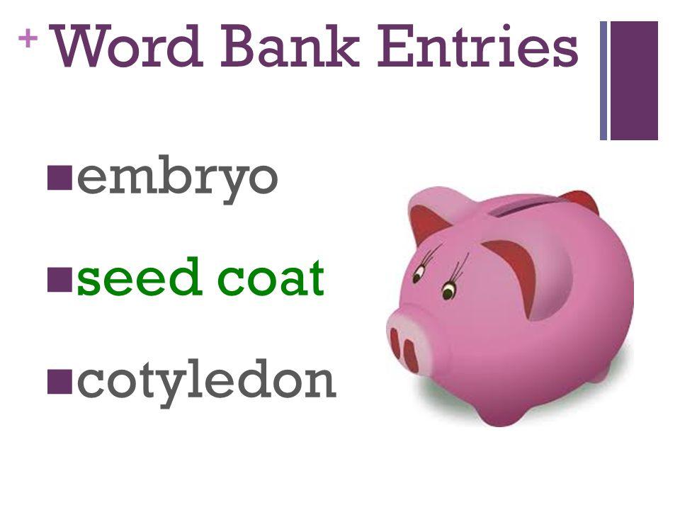 Word Bank Entries embryo seed coat cotyledon
