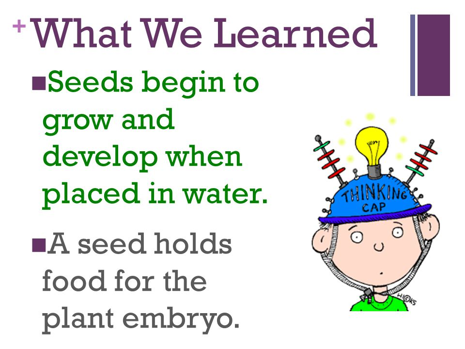 What We Learned Seeds begin to grow and develop when placed in water.