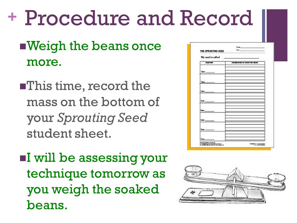 Procedure and Record Weigh the beans once more.