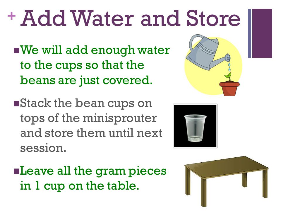 Add Water and Store We will add enough water to the cups so that the beans are just covered.