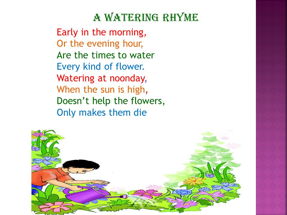 A WATERING RHYME Early in the morning, Or the evening hour,
