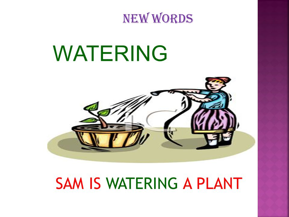 NEW WORDS WATERING SAM IS WATERING A PLANT