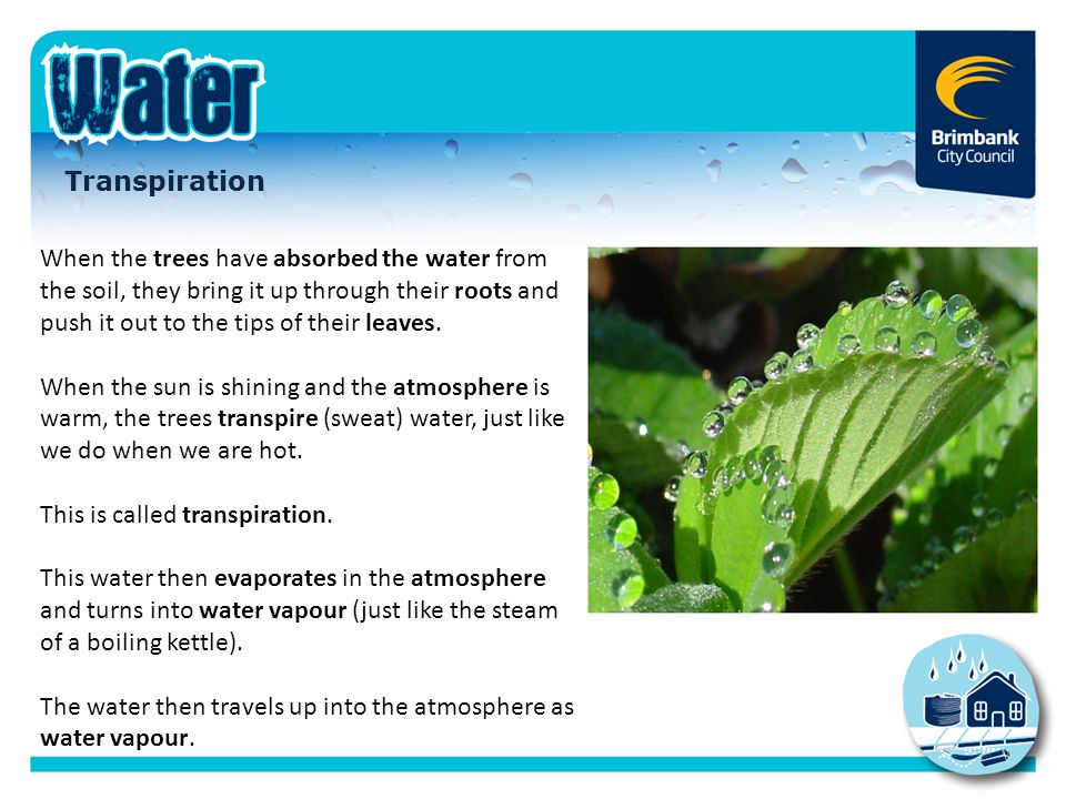 This is called transpiration.