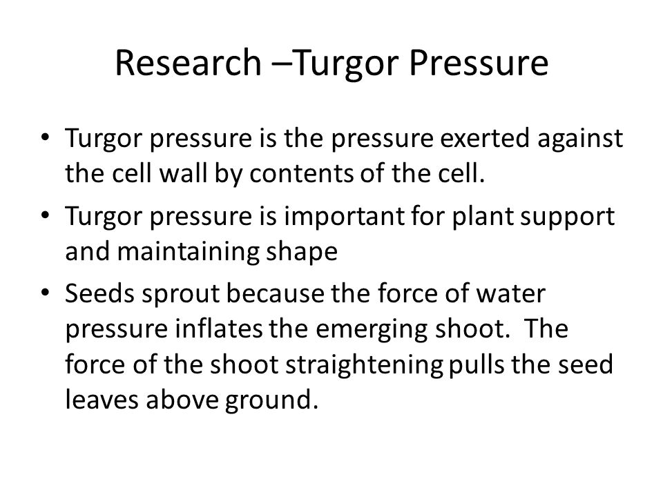 Research –Turgor Pressure