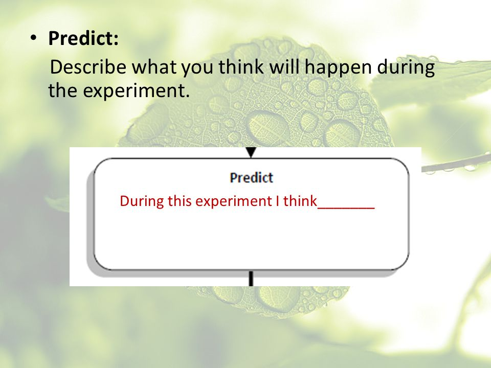 Describe what you think will happen during the experiment.