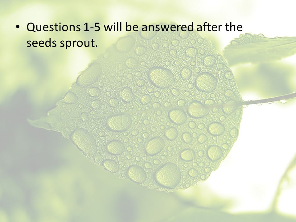 Questions 1-5 will be answered after the seeds sprout.