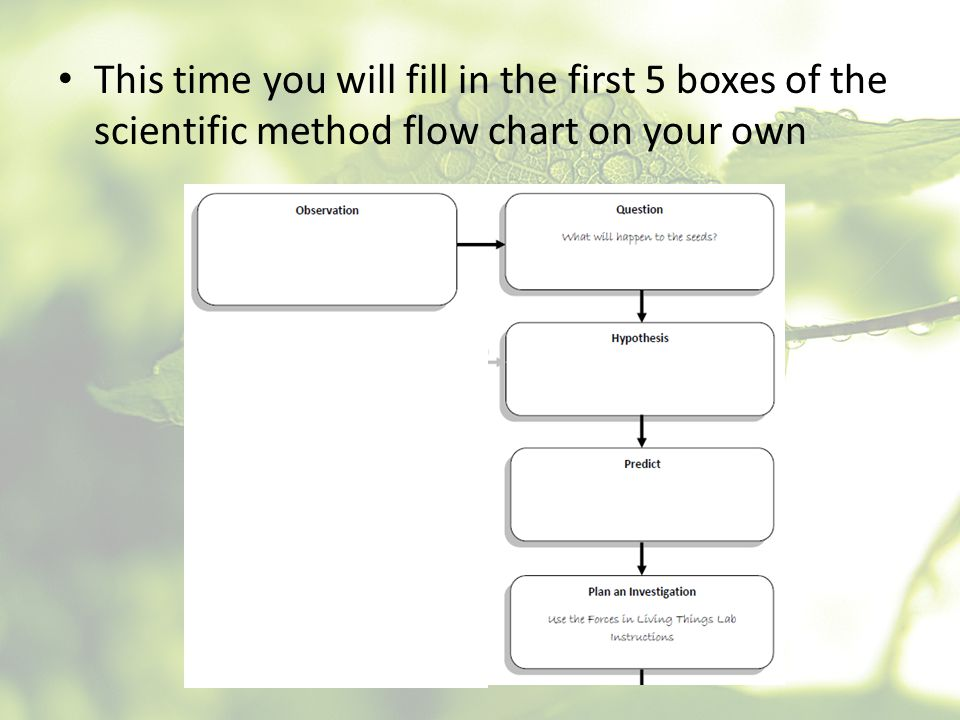This time you will fill in the first 5 boxes of the scientific method flow chart on your own