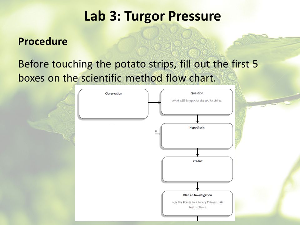 Lab 3: Turgor Pressure Procedure