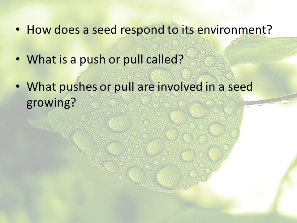 How does a seed respond to its environment