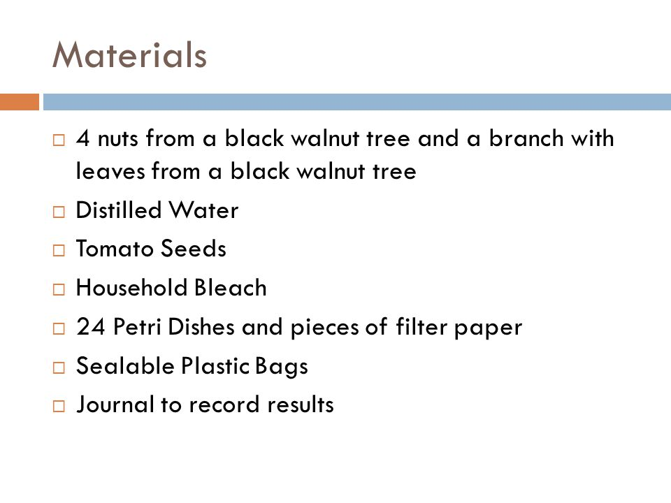 Materials 4 nuts from a black walnut tree and a branch with leaves from a black walnut tree. Distilled Water.