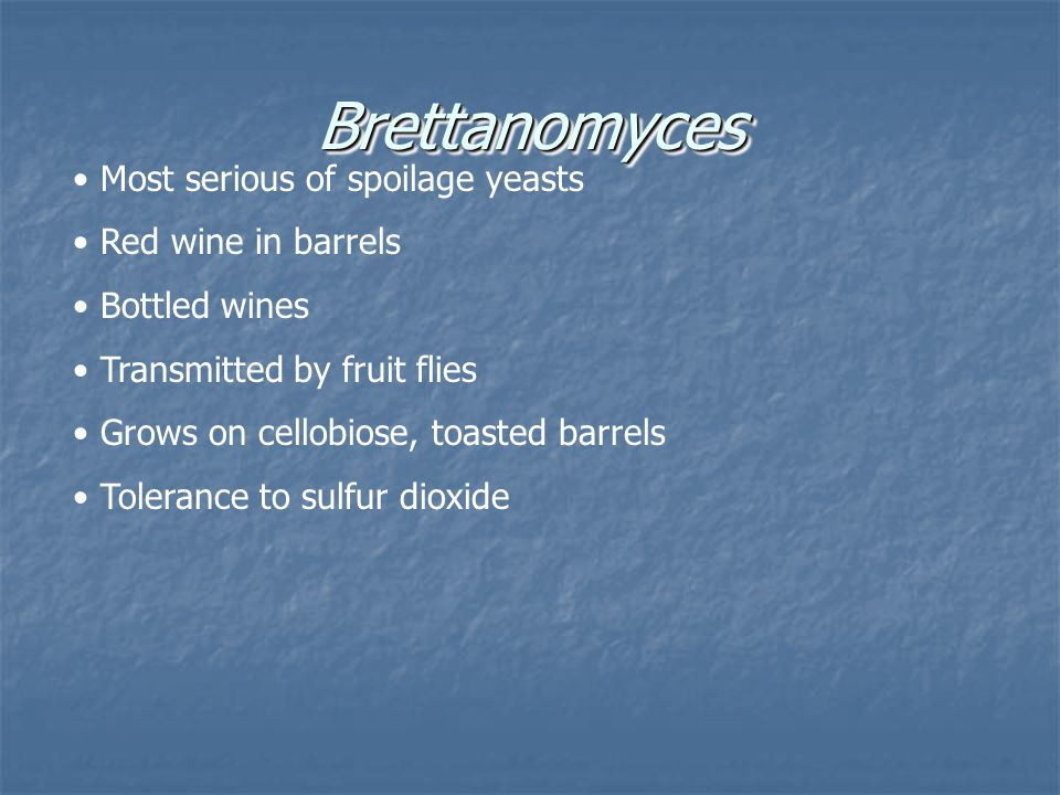 Brettanomyces Most serious of spoilage yeasts Red wine in barrels
