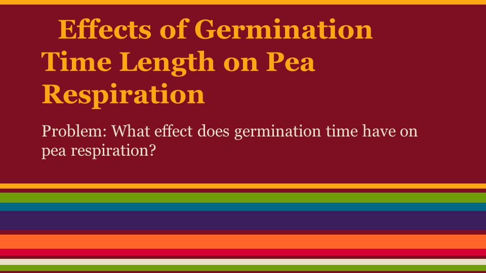 Effects of Germination Time Length on Pea Respiration