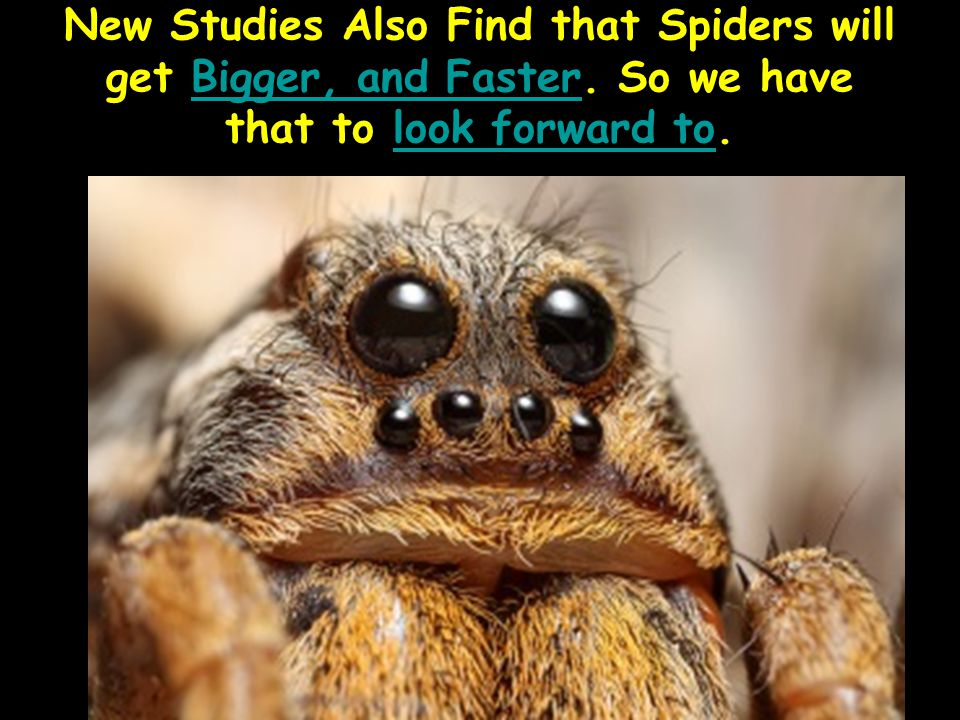 New Studies Also Find that Spiders will get Bigger, and Faster