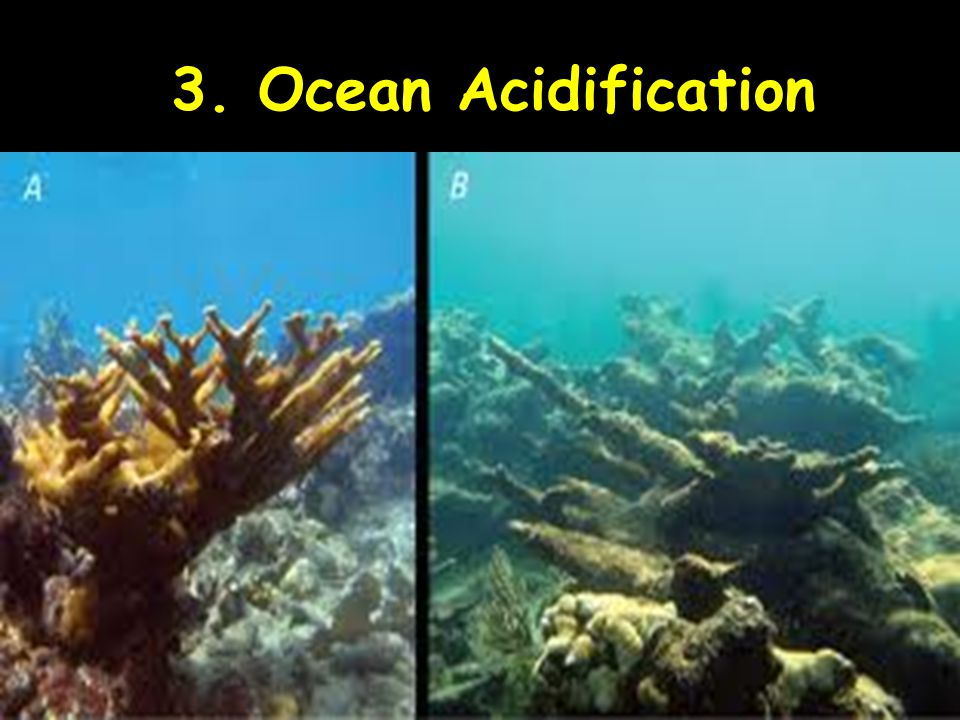 3. Ocean Acidification