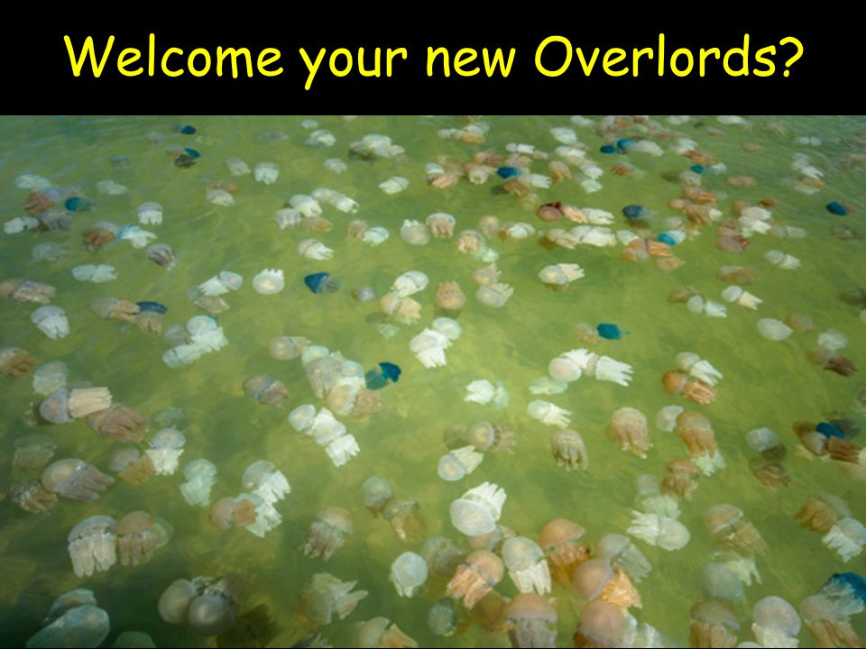 Welcome your new Overlords