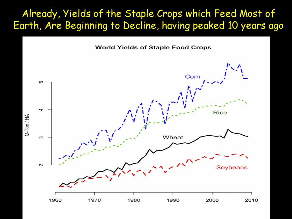 Already, Yields of the Staple Crops which Feed Most of Earth, Are Beginning to Decline, having peaked 10 years ago